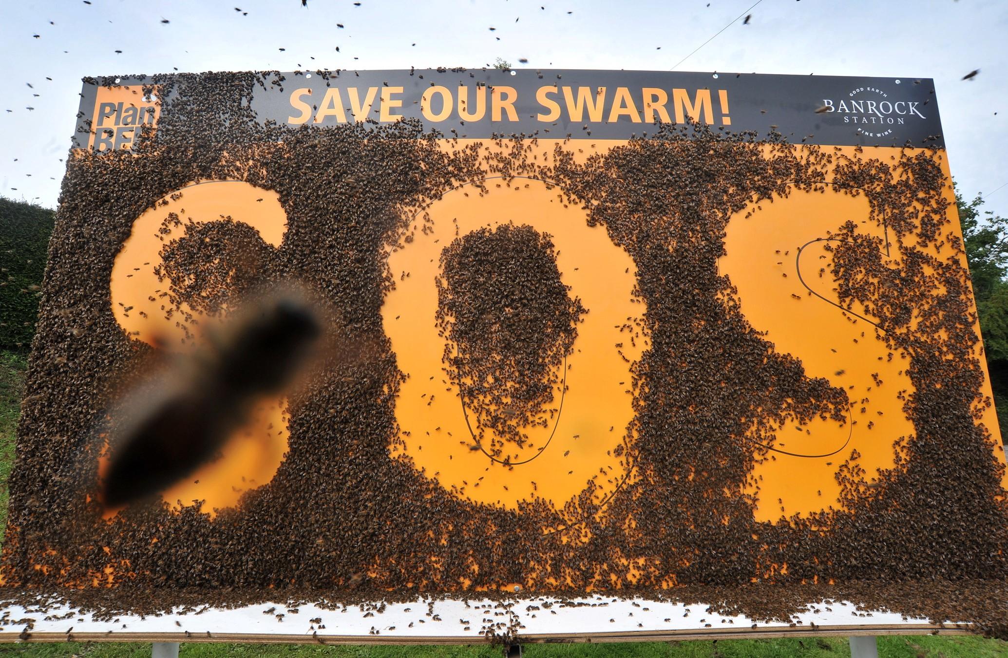 Live bee board billboard outdoor abeilles marketing alternatif banrock station plan bee cooperative 3 Пчелиный рекламный щит