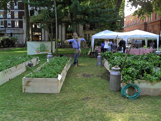 heinz city allotment Партизанский огород в центре города